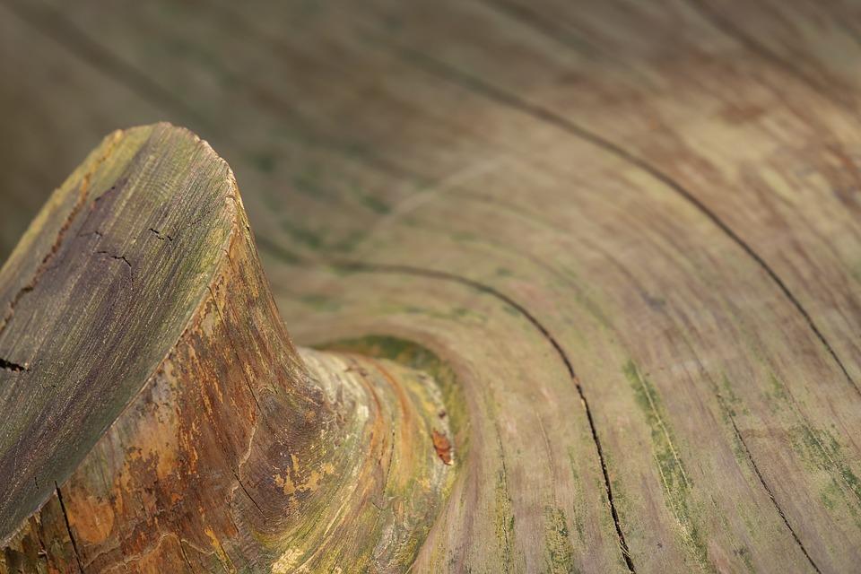 holé dřevo