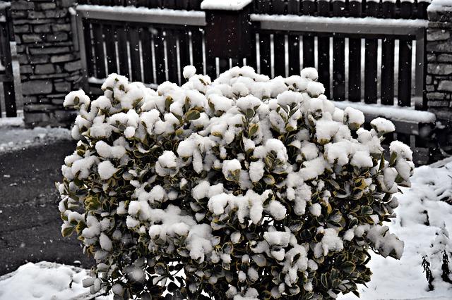 Příprava zahrady na zimu